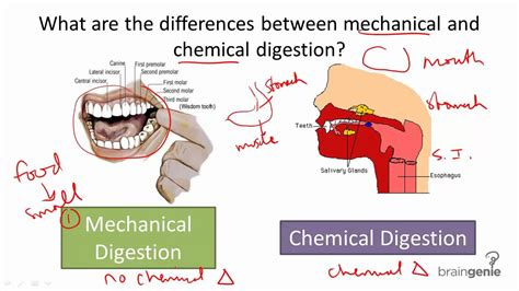 digestion chemicals picture 2