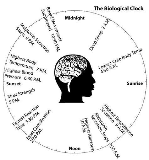 circadian rhythm sleep disorders picture 5