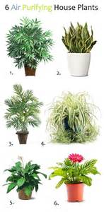 does sleeping with plants cut off your oxygen picture 6