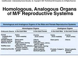 anti reproductive system picture 13