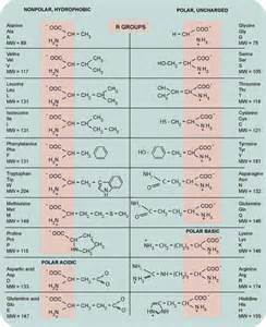 best natural amino acids for erections picture 4