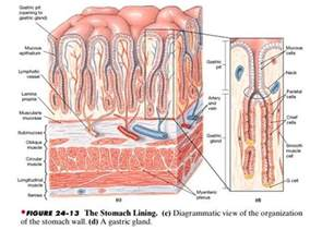 what does intestinal intersial cell produce picture 9