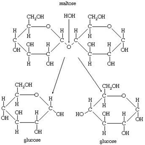what chemical reaction is involved in digestion picture 10