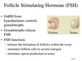 the hormone testosterone functions inside a cell by picture 1