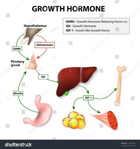 growth hormon treatment in bangladesh picture 17