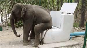 elephant bladder volume picture 10
