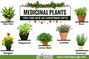 herbal plants that can be use for abortion picture 7