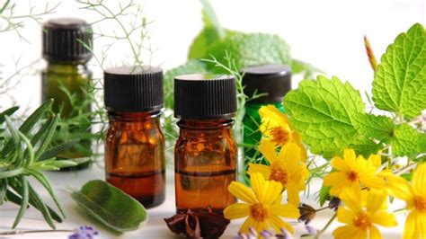 herbs for diabetics picture 6