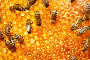 how many queen bees in a hive picture 7
