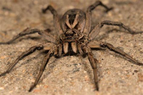 black spider fat burner is it bad for picture 9