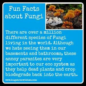 facts about fungi picture 3