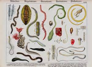 dog intestinal worms picture 6