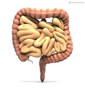 bowel intestine picture 9