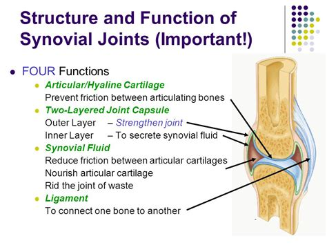 function of joints picture 1