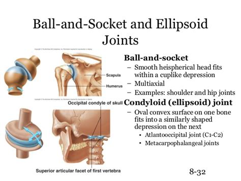 ellipsoid joint picture 2