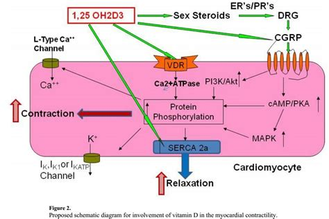 are estrogen and testosterone steroid hormones picture 9