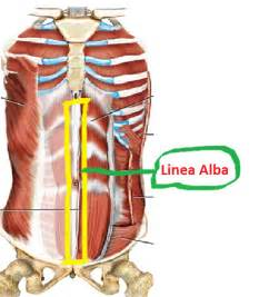 accessory muscle picture 9