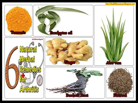 herbal remedies for arthritis picture 9