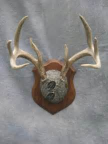 how to whiten deer antlers picture 2