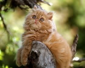 feline h picture 3