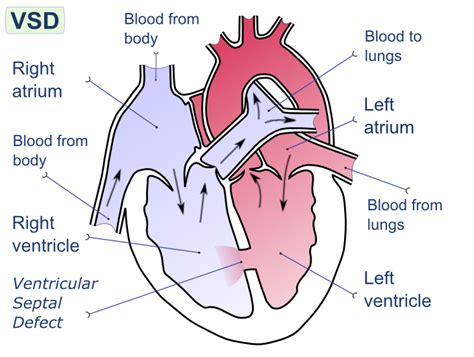 blood flow through reptilian heart animation picture 2