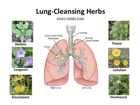 artery cleansing herbal supplements picture 18