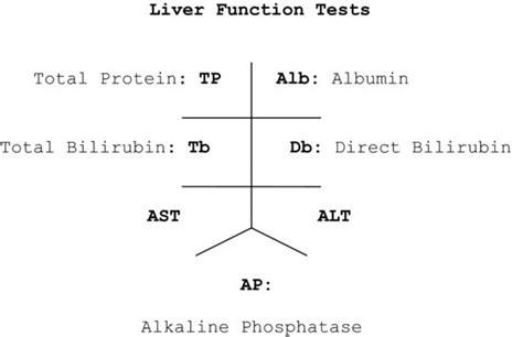 alt liver function levels picture 15