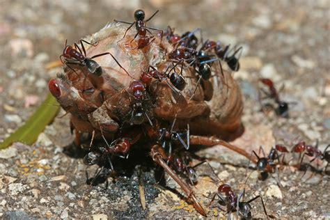 cicada diet picture 3