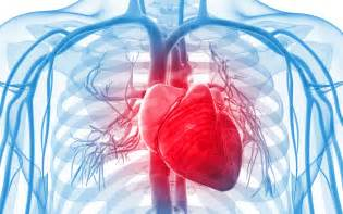 cardiovascular picture 2