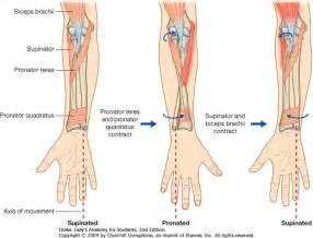 muscle pain in upper arms picture 6