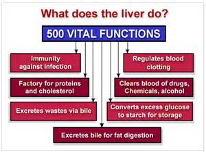 what nutrients does the liver need to metabolize picture 1