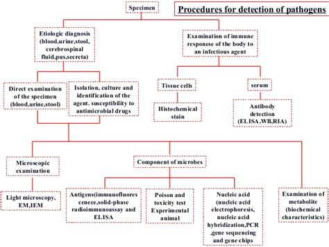 what test are used for bacterial infections picture 1