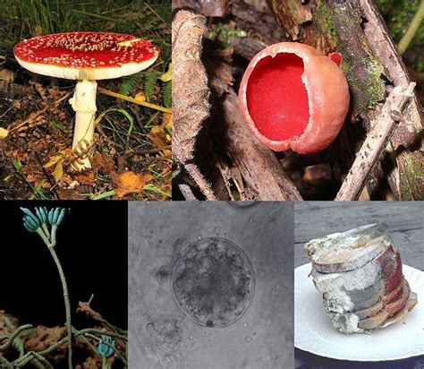 types of fungus picture 9
