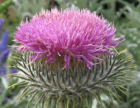 thistle b & b picture 3