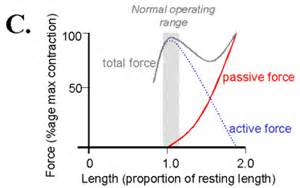 total tension curve picture 5