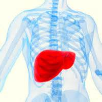 location of liver in human body picture 10