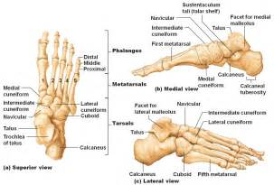 medal carpal joint picture 5