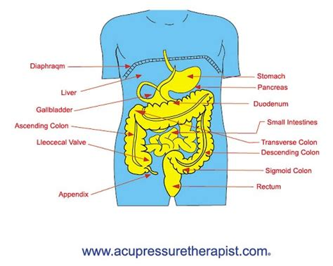 acupressure weight loss picture 1