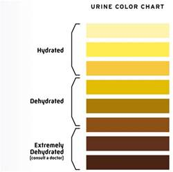 bladder retains 225cc of urine picture 11
