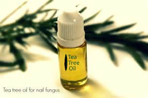 tea tree oil for nail fungus picture 8
