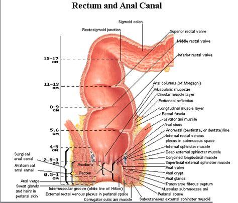 colon cancer diet picture 3