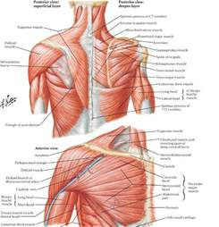 muscle spasms of the neck and shoulders picture 14