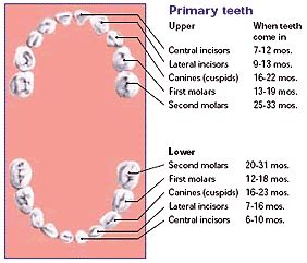 losing primary teeth picture 5
