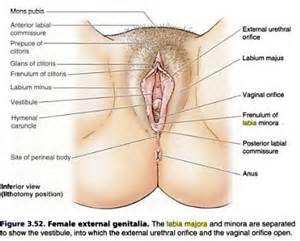 internal view of vagina picture 7