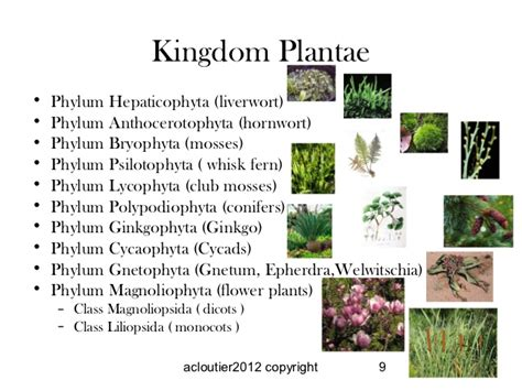 characteristics of fungi kingdom picture 1