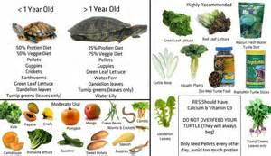 box turtles diet picture 5