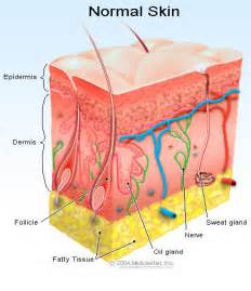 free images of human skin illustration picture 19
