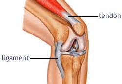 knee joint - sports picture 10