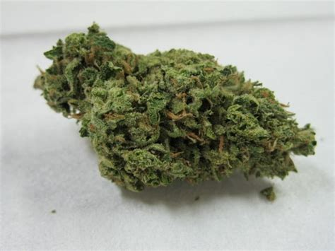 where can i buy blueberry haze herbal picture 2