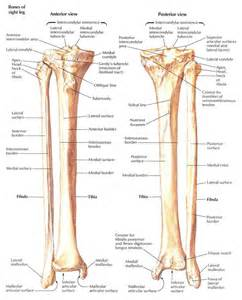 anatomy picture 10